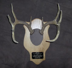 Skul Mounts and Plaques - Custom work by Brian Pragle